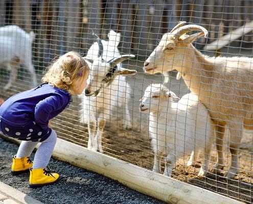une-taxe-d'apprentissage-pour-les-parcs-zoologiques-?