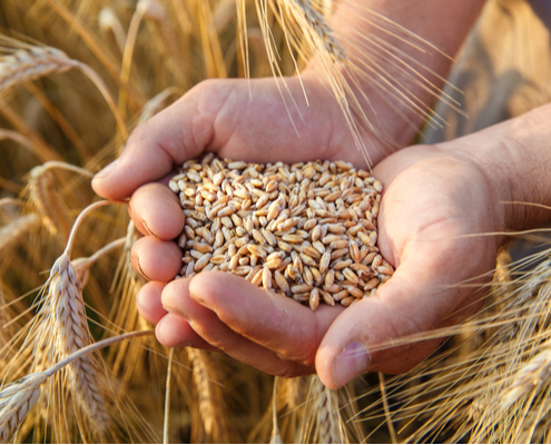 coronavirus-:-la-msa-accompagne-les-entreprises-agricoles