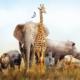 coronavirus-(covid-19)-:-une-nouvelle-aide-pour-les-cirques-animaliers